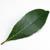 блюда с лавровым листом