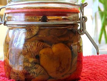Грибы рыжики на зиму грибы на зиму